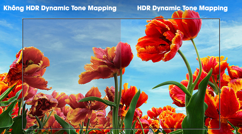 HDR Dynamic Tone Mapping