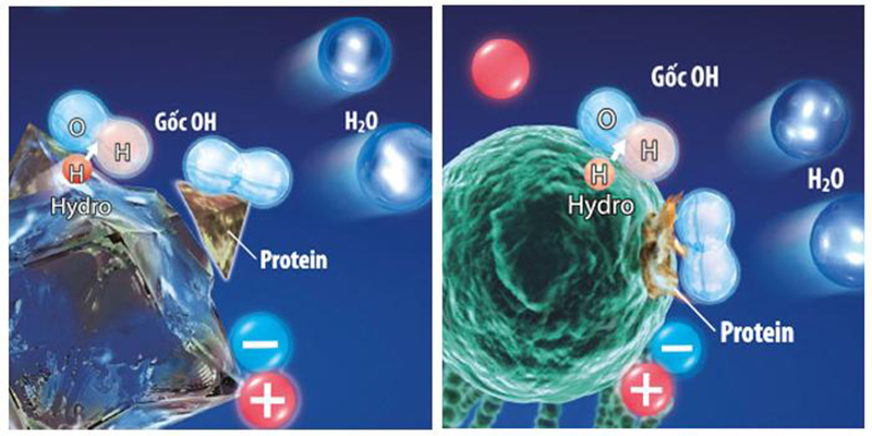 Công nghệ Plasmacluster Ion giúp làm sạch và tiêu diệt vi khuẩn