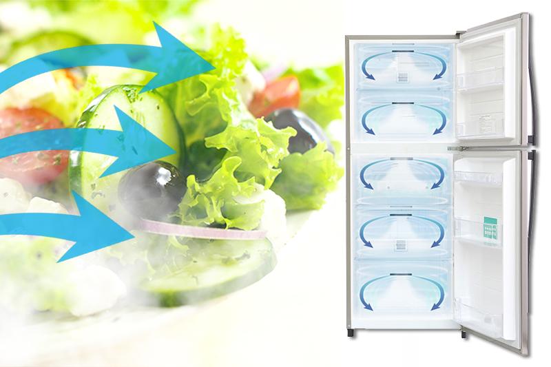 Công nghệ luồng khí lạnh vòng cung của nó giúp cho tủ lạnh Toshiba GR-S21VUB được làm lạnh đồng đều