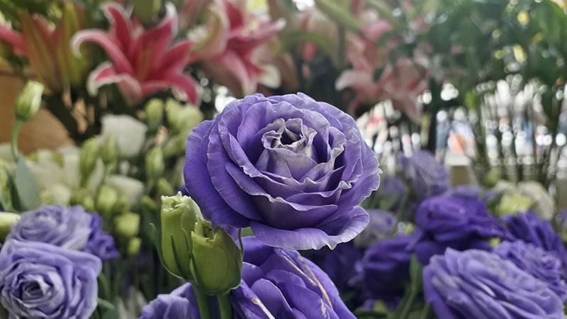 Ảnh chụp từ điện thoại Samsung Galaxy J6 Tím Lavender