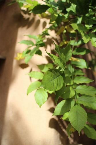 Hình ảnh chụp bởi Canon EOS M nguồn: dpreview.com