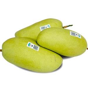 Xoài Đài Loan khoảng 0,7 - 1,2 kg/trái
