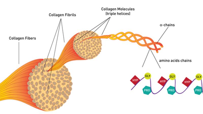 Collagen là gì? Tác dụng của collagen với làn da và cơ thể như thế nào