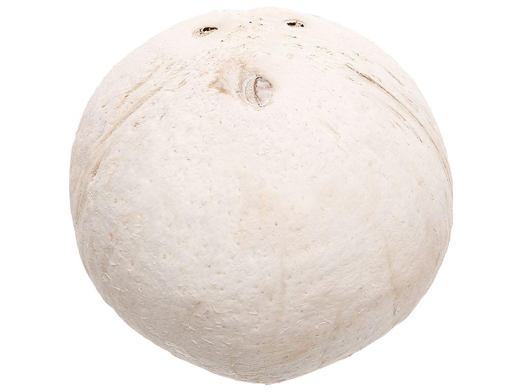 Dừa trái Ba Đốt khoảng 450g 4