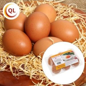 Hộp 6 trứng gà tươi QLEgg