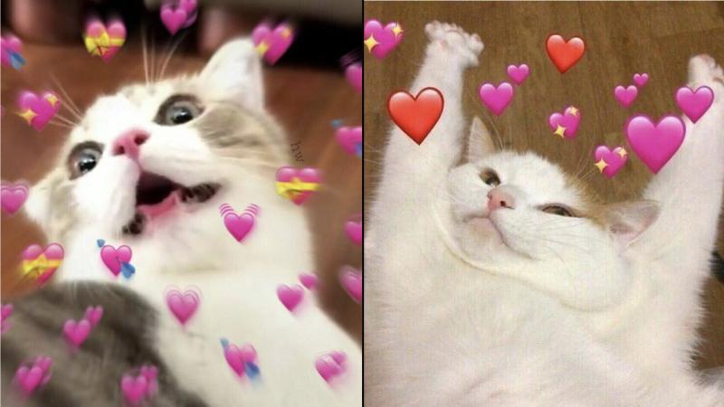 Hãy gửi những chiếc meme mèo dễ thương cho đối phương