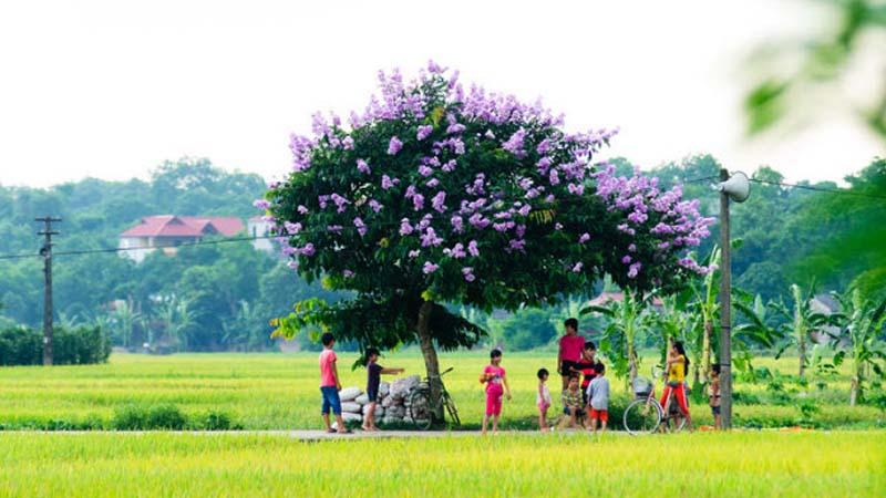 Cây cối phát triển xanh tươi